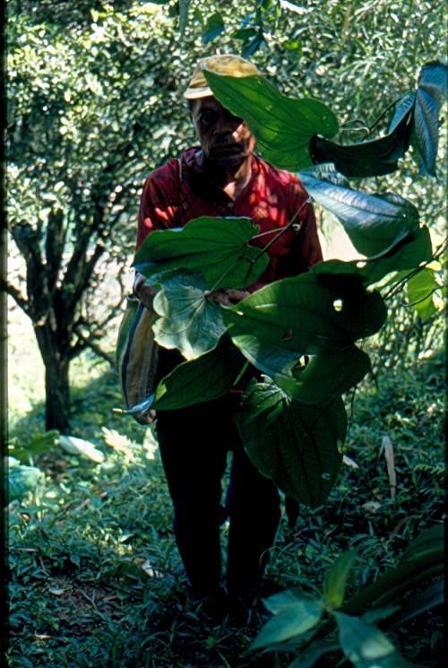 Chiapas 1999