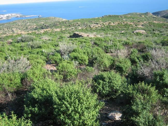 Foto: (Albert Vilà - UAB). Parte de la zona estudiada por los investigadores de la UAB y del CREAF.