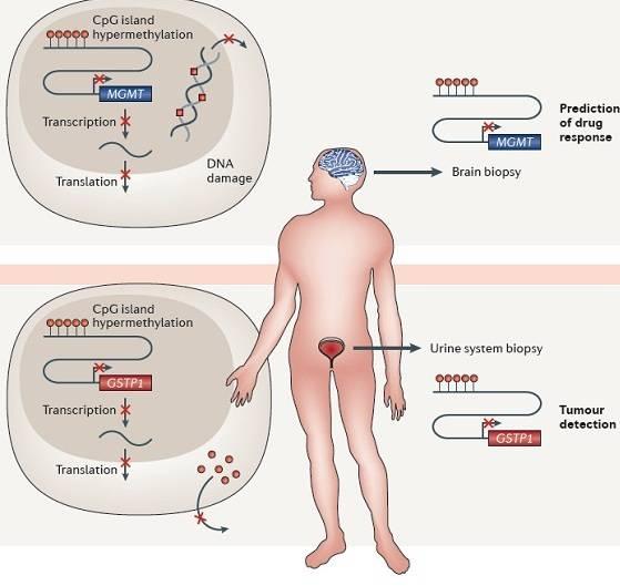 Representación marcadores epigenéticos