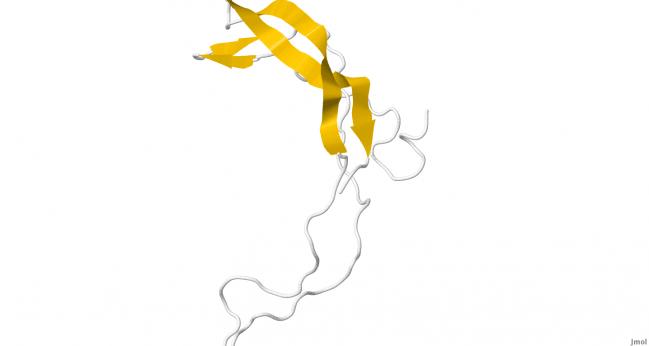 proteína esclerostina