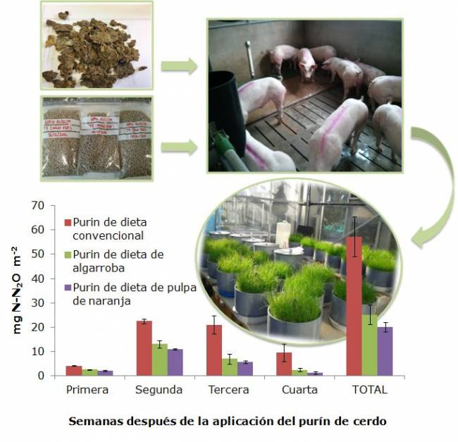 Cerdos consumiendo piensos con pulpa de cítricos deshidratada y las emisiones de N2O que produce la aplicación de los purines obtenidos.
