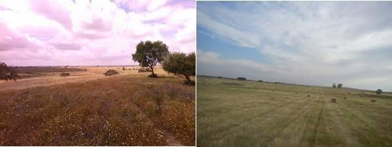 Dos fotografías, a la izquierda un campo con la hierba más alta, a la derecha un campo segado.