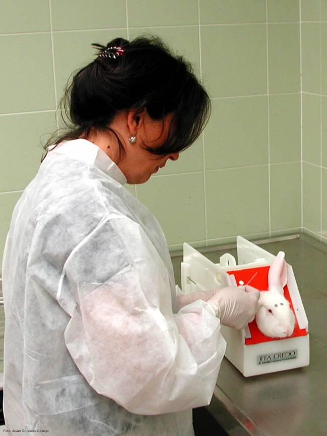 Los investigadores han profundizado en el mecanismo responsable de la reducción del daño hepático inducido por esta hormona en un modelo experimental
