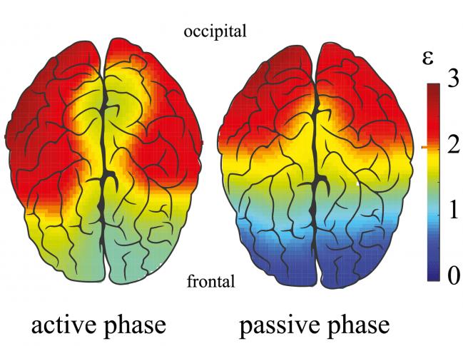 Relación entre las energías de los componentes espectrales de alta y baja frecuencia, calculados para cada canal EEG durante las fases activas y pasivas. Fuente: A. Pisarchik et al.