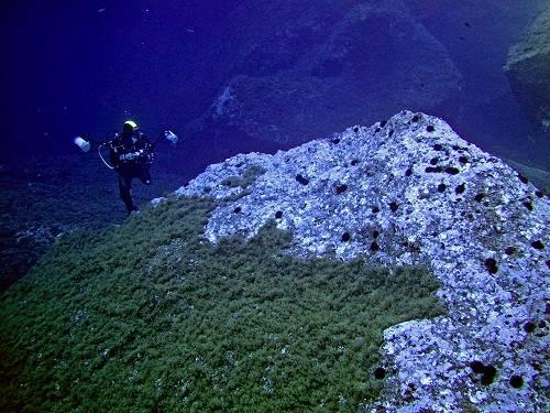 Los autores del artículo han aplicado un protocolo común de estudio en trece áreas marinas templadas de todo el mundo (foto: Bernat Hereu, Dept. Ecología, Universidad de Barcelona).