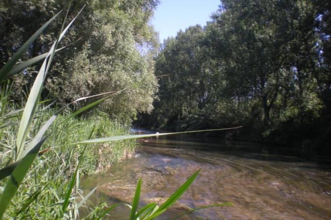 Los efectos del cambio global podrían incrementar todavía más la salinidad de los ríos en muchas regiones del mundo (Fotografía: río Llobregat en Balsareny / Grupo de Investigación FEM-UB)