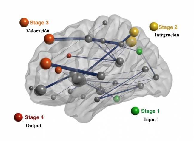 Las regiones que componen la red cerebral estudiada contribuyen a la captura de la información relevante (Stage 1, input), su integración (Stage 2), valoración (Stage 3) y preparación de la respuesta (Stage 4, output). /UAM