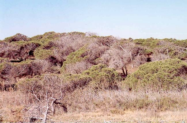 mortalidad árboles