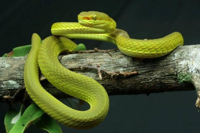 Nueva serpiente en la India