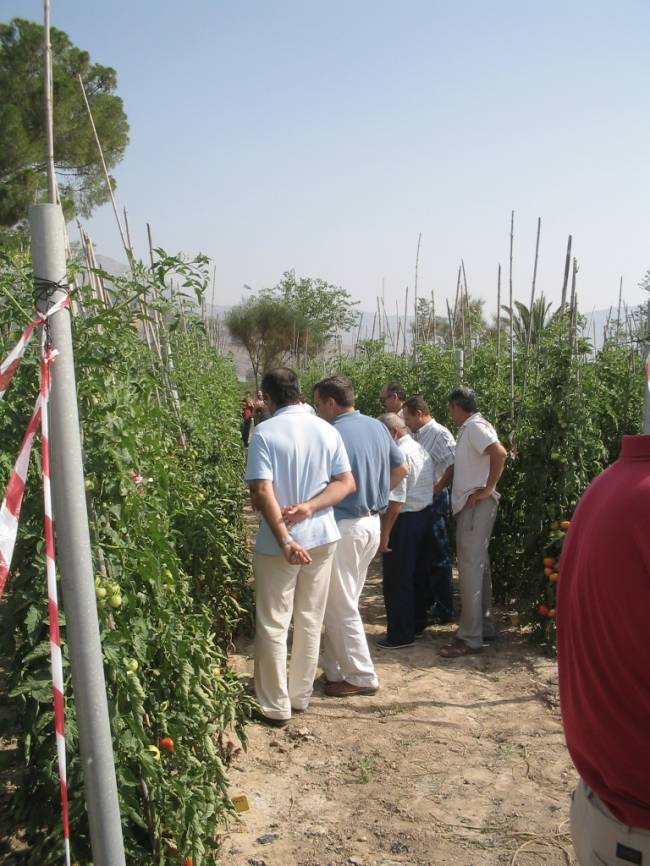 Un grupo de agricultores, colaboradores con la UMH, analizando la plantación de los investigadores