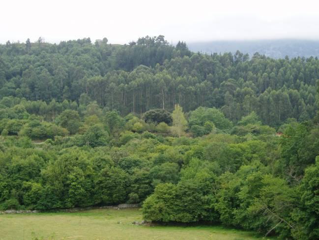 El centro investigará en la selvicultura, protección de los bosques, conservación de recursos genéticos y biodiversidad