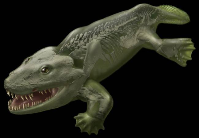 Reconstrucción en 3D de Ichthyostega