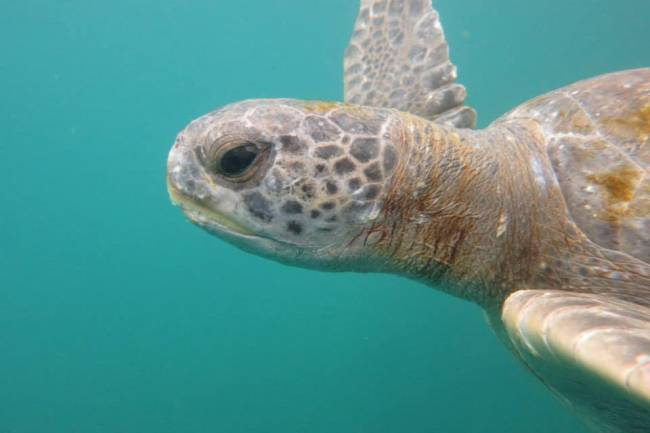 El estudio se ha realizado en dos áreas costeras peruanas