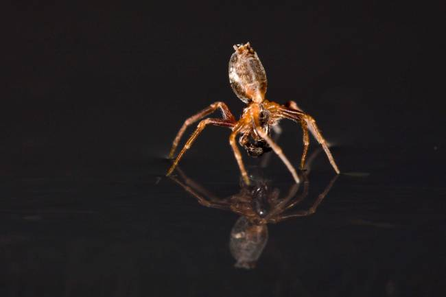 Una araña en el agua