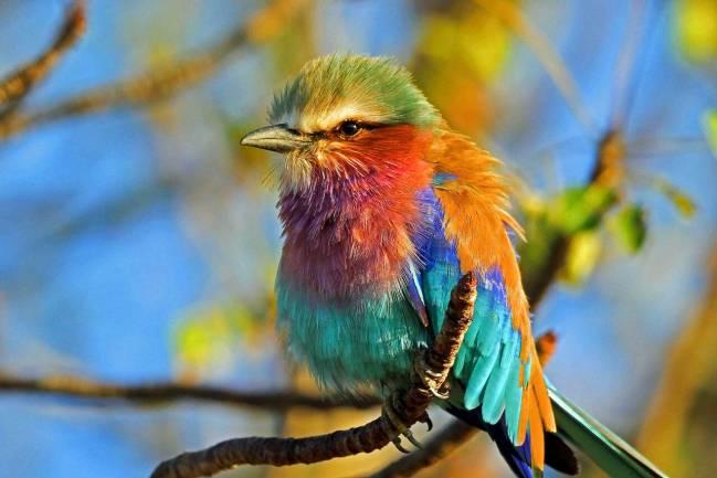 A lo largo del tiempo y en todas las culturas, las aves  han enviado señales acerca de la salud del medio ambiente