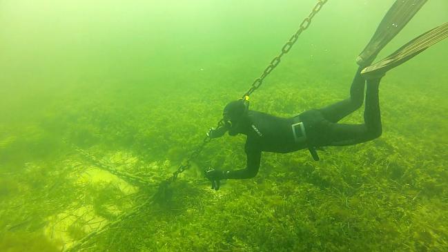 Pérdida de vegetación en las praderas marinas de las bahías de Rottnest Island (Australia)
