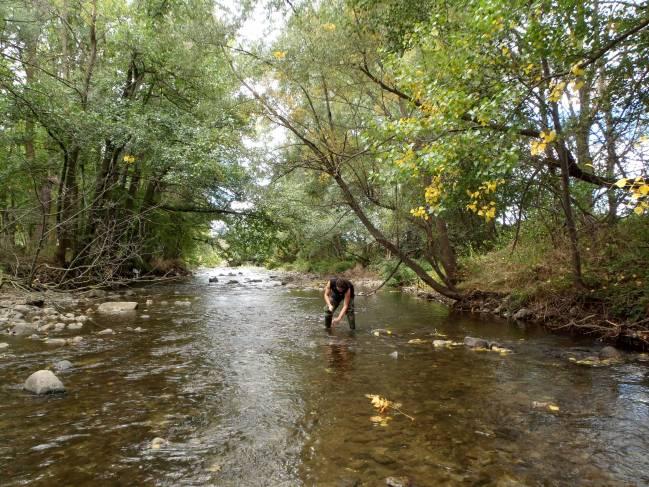 El investigador Ibon Aristi en el río Segre