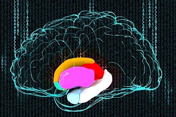 Patrón de actividad eléctrica cerebral