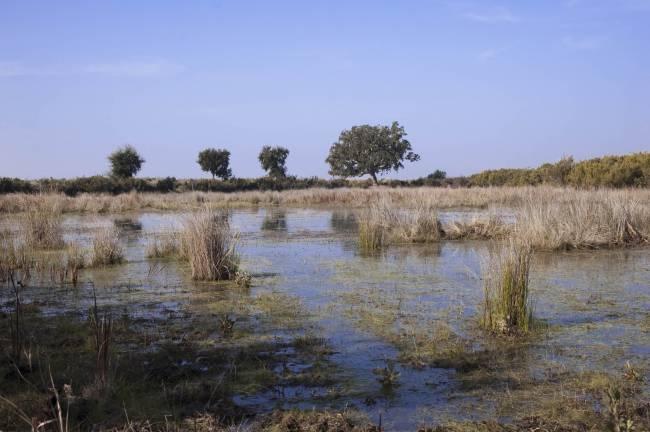 Charca temporal Doñana