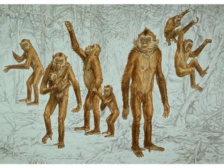 Reconstrucción del primate hominoideo Oreopithecus bambolii