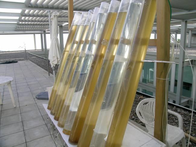 Cultivo experimental de microalgas para la producción de biodiesel UAB-CSIC.
