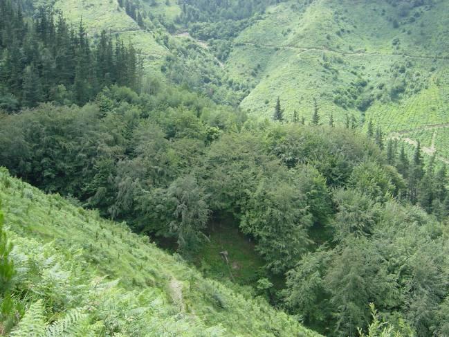 Desde la UPV/EHU se ha estudiado la capacidad del bosque autóctono para recolonizar las plantaciones de pino