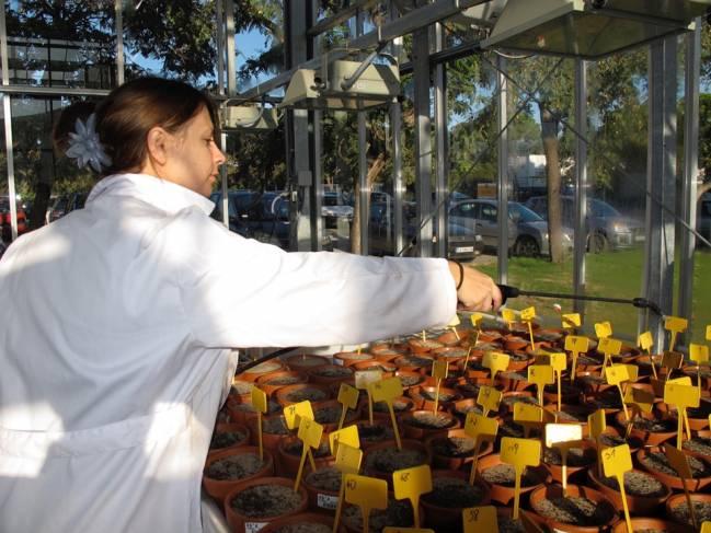 María Paniw, trabajando en el invernadero de la Universidad de Cádiz.