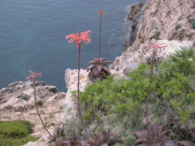 Matorral Mediterráneo