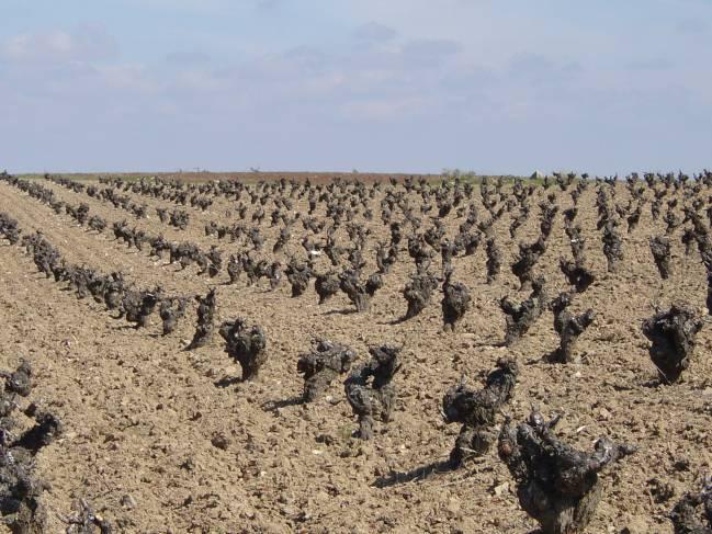 El proyecto pretende estudiar la relación entre las propiedades de un terreno y la calidad del vino que produce.