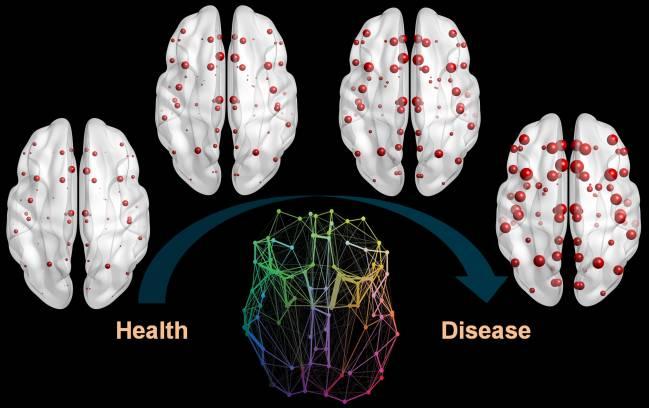 El modelo es similar a la propagación de enfermedades epidémicas en la sociedad, pero dentro del sistema nervioso