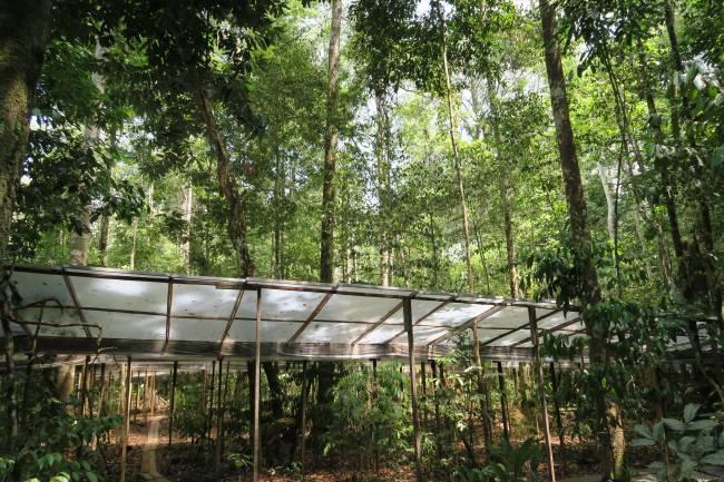 Imagen del experimento de la selva