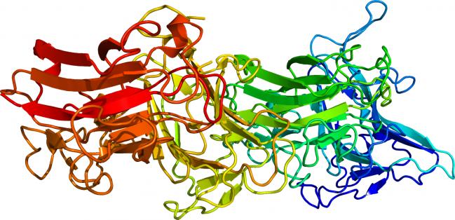 Molécula de la reelina, una proteína implicada en la neuroplasticidad neuronal. / Wikipedia