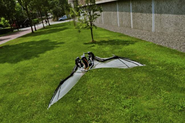 BaTboT: Micro robot aéreo tipo murciélago biológicamente inspirado en la fisionomía y biomecánica del espécimen Pteropus poliocephalus