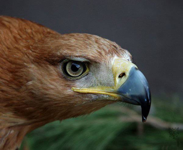 Aguila Imperial, Journal of   Applied Ecology.