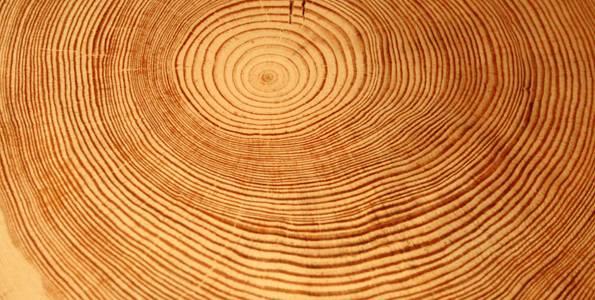 Los anillos de los árboles ayudan a evaluar y prevenir avenidas torrenciales