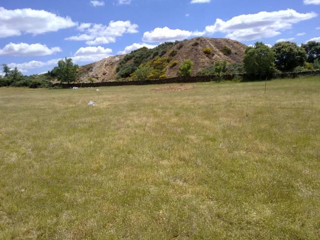 Una investigación del IRNASA en la antigua explotación de wolframio de Barruecopardo alerta sobre la exposición del ganado al arsénico debido al suelo y las plantas que ingiere