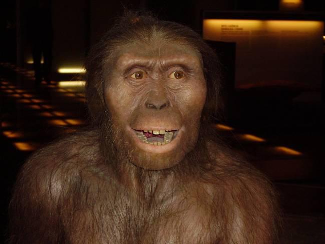 El nuevo estudio, dirigido por el profesor Alejandro Pérez Pérez de la Universidad de Barcelona, analiza el patrón de microestriación de la dentición en diferentes especies de primates ya extinguidos.