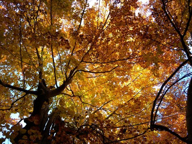 Los bosques gestionados tienen mayor capacidad de absorción de CO2 frente a los bosques no gestionados