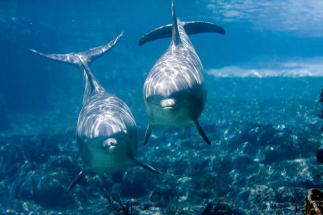Delfines. Imagen: jeffk42