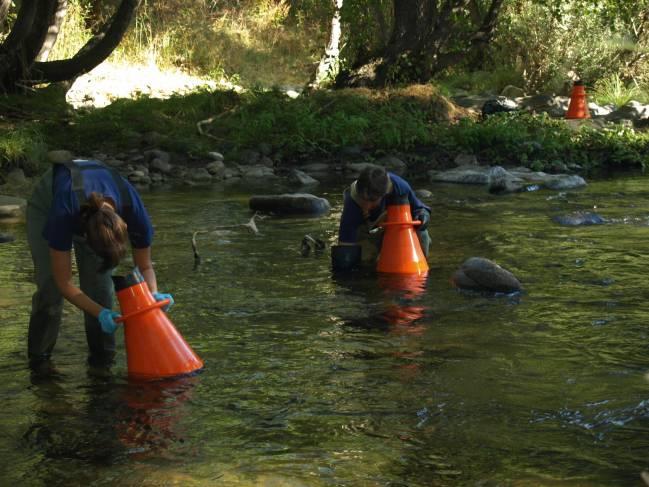 La Universidad de Salamanca comprueba que no existen ejemplares de náyades jóvenes en la cuenca del Duero