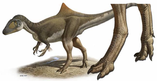 Los dinosaurios carnívoros tenían los pies de gallina