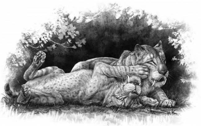Tigres dientes de sable