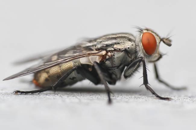 Estos estudios demuestran que, a pesar de que en la dotación de genes los mamíferos no se diferencian tanto de los insectos, sí tienen una mayor complejidad en cómo regulan su función. Nick Bradsworth