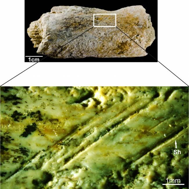 Hallan las primeras evidencias de uso de herramientas de piedra para la extracción de carne animal en el yacimiento de El-Kherba (Ain Hanech), en Argelia