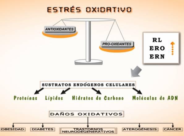 Gráfica sobre el estrés oxidativo