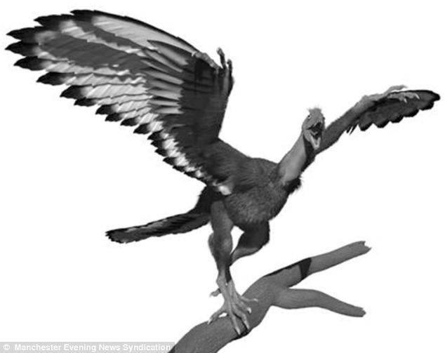 Reconstrucción del plumaje de Archaeopteryx. / Universidad de Manchester