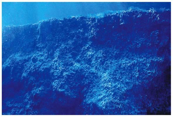 Arrecife en una pradera de posidonia oceánica