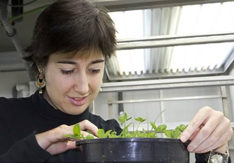 La investigadora Usue Pérez junto a una de las cámaras de crecimiento de plantas en condiciones controladas del laboratorio.