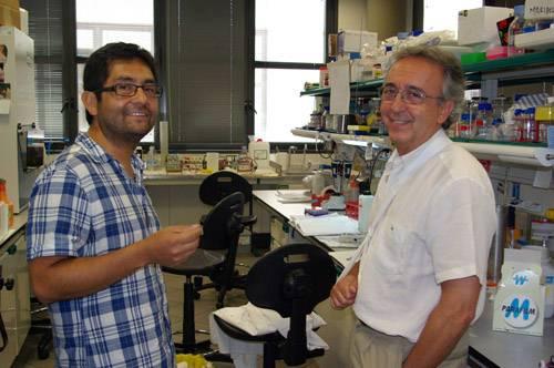 El investigador chileno Juan Pablo Muñoz (izquierda) y el líder del estudio Antonio Zorzano