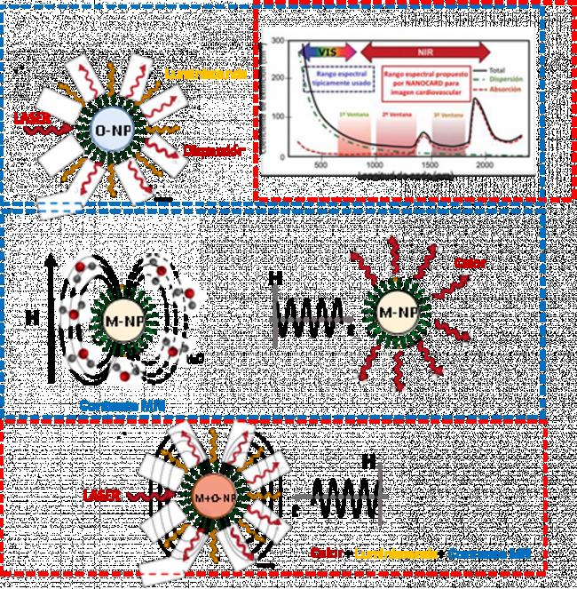 Nanopartículas NANOCARD // Departamento de Ciencias Experimentales y de la Salud, Universidad Pompeu Fabra